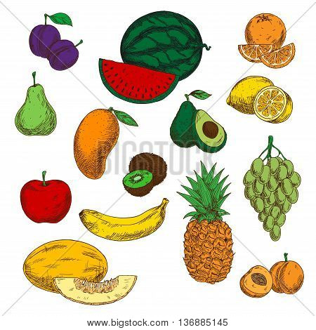 Bright ripe and juicy orange and lemon, banana and apple, mango, pineapple and green grapes bunch, peach, plums and pear, watermelon and avocado, kiwi and cantaloupe melon sketched fruits symbols