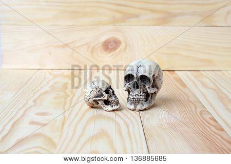 Human skull on pine wood background ; still-life