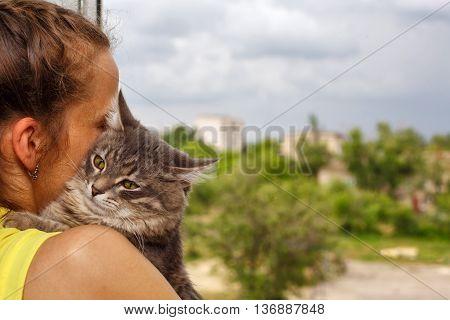 The cat sits on hands at the mistress. Best friend. Embrace. Pet.