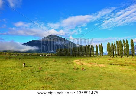 Countryside in Chilean Patagonia. Green fields along the avenue of cypresses grow. Mountain range is visible in the distance