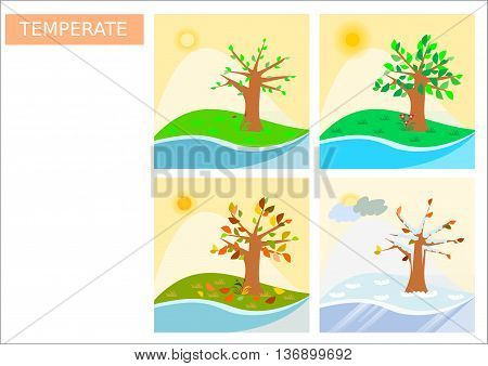 Square shaped four seasons for temperate climate illustrations