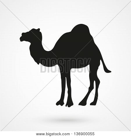 Camel Icon On White Background In Flat Style. Simple Vector Illustration