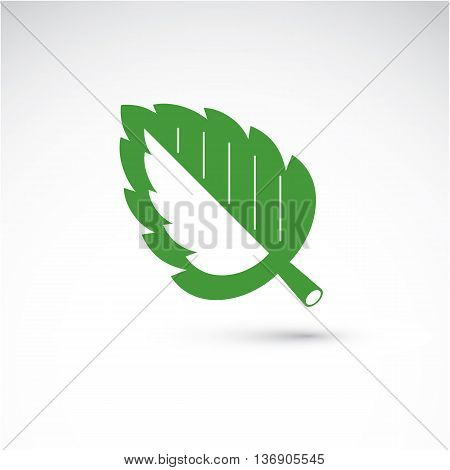 Spring hazel tree leaf botany and eco flat image. Vector illustration of herb natural and ecology element best for use in design.