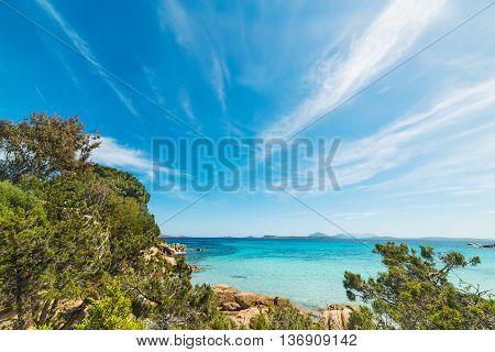 vegetation by the shore in Capriccioli beach Sardinia