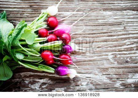 Bunch of fresh home grown radishes