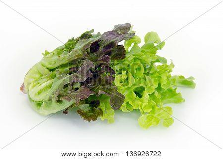 Salad vegetable leaf (Green oak and Batavia) isolated on white background