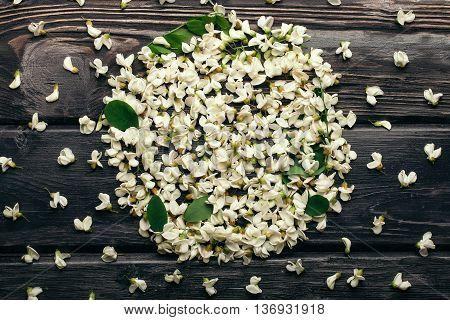 White Acacia Blossoming Petals