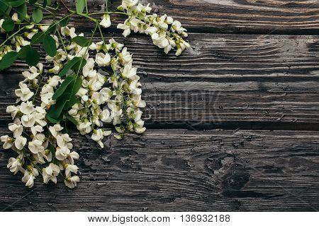 White Acacia Blossom Flowers