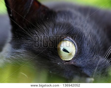 Cats Eye in close up with long grass