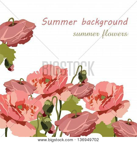 Vintage Poppy flowers. Vector floral painted background