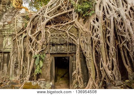 Temple Ruins Overgrown By Trees