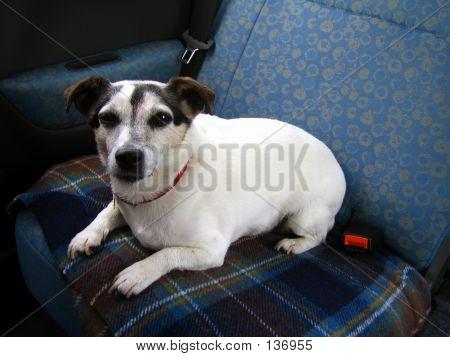 Sitting Dog 2