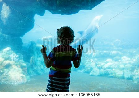 Little kid boy observing dolphins in a recreation area, aquarium. Cute preschool child having fun with watching animal life.
