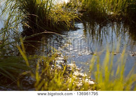 Small water stream in a meadow in the morning light