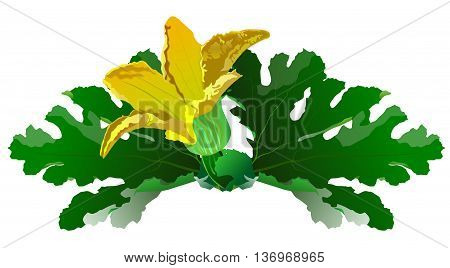 An illustration of a zucchini flower with two leaves in the back. On a white background.