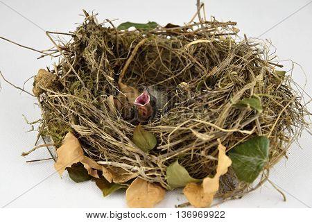 Birds nest with a little bird beak that opens
