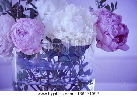 Withered flowers in a vase. Pink white color. Purple tone. Horizontal