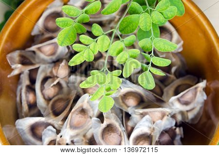 Moringa (Other names are Moringa oleifera Lam. MORINGACEAE Futaba kom hammer vegetable hum hum bug Moringa bug Hoo) leaf and seed in the bowl