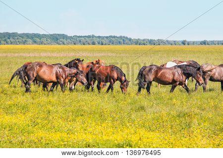 Horses on green field in spring in nature park Lonjsko polje, Croatia