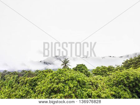 Tree Bush Top Line View  Forest And Montain In White Fog