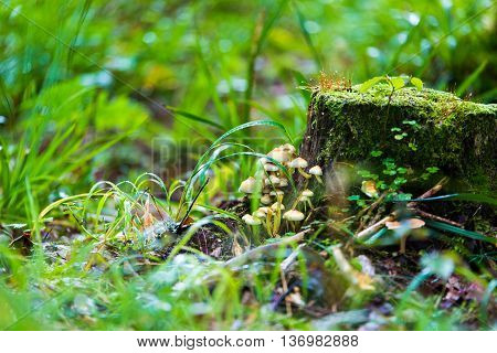 small mushrooms toadstools in forest selective focus