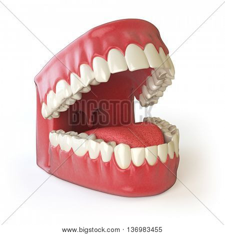 Teeth or dentures isolated on white. Open human mouth upper and lower jaw. 3d illustration