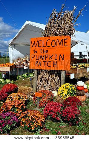Ronks Pennsylvania - October 16 2015: Sign and colourful Chrysanthemum flowers at the Pumpkin Patch farm