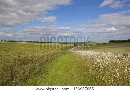 Scenic Bridleway With Wildflowers