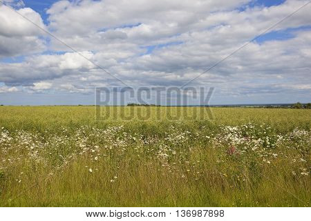 Canola Crop And Wildflowers
