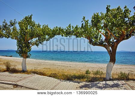 Beach and trees on the beach of Poros, Kefalonia, Ionian Islands, Greece