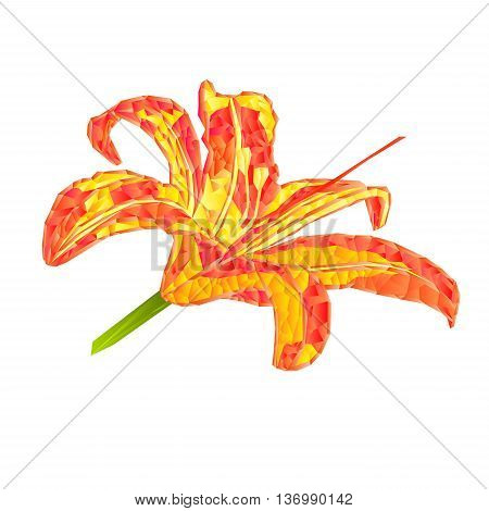 Spring flower Lily Daylily polygons vector illustration