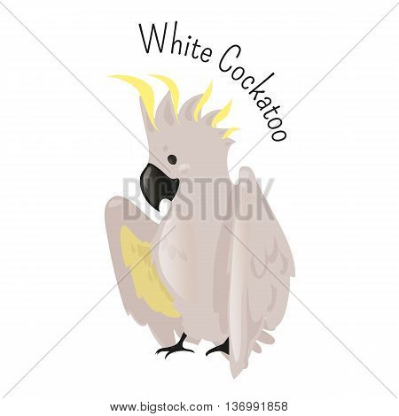 Exotic white cockatoo. Bird isolated. Cacatua alba. Medium-sized umbrella kind. Funny cartoon character. Part of series of various australian animal species. Wildlife concept. Home pet. Vector