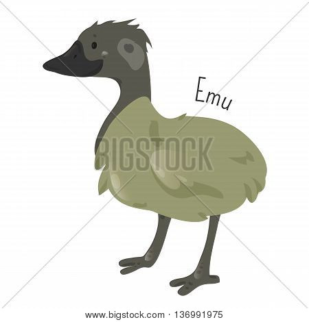 Emu isolated on white. Cartoon character. Australia endemic. Cute ostrich. Dromaius novaehollandiae. Second-largest living bird. Part of series of australian animal species. Wildlife concept. Vector
