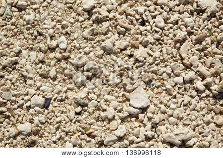 Key West beach shells sand detail in Florida USA fort Zachary Taylor