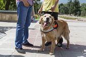 Постер, плакат: Guide And Assistance Dog