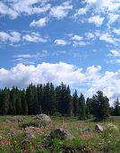 stock photo of colorado high country  - vertical shot of high country meadow in summer - JPG