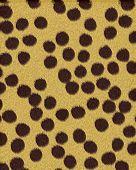 Cheetah Large Spots Short Fur poster