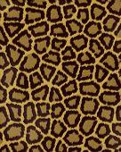Leopard Large Spots Short Fur poster