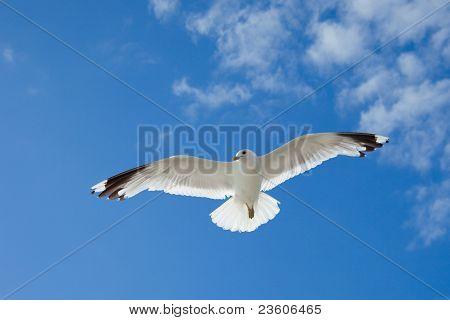 Möwe fliegen in den Himmel