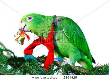 Green Amazon Parrot With A Golden Bell Sitting On A Christmas Tree