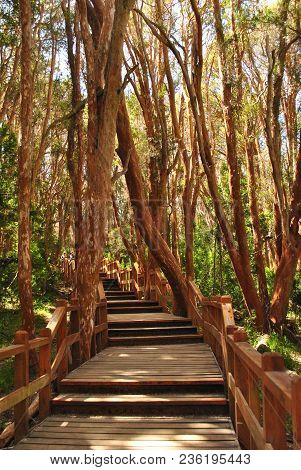 Wooden Path For Tourists In