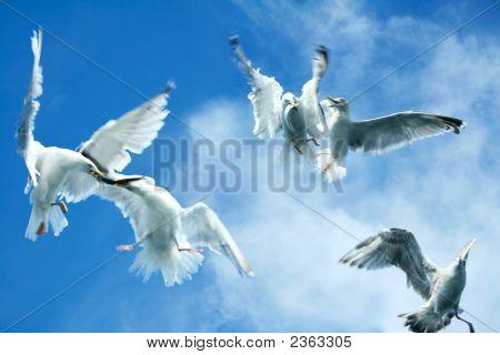 Quarrel In Heaven