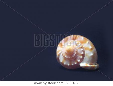 Shellstock 4