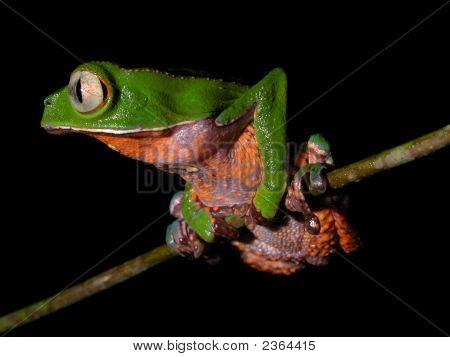 Amazon Frog Balancing