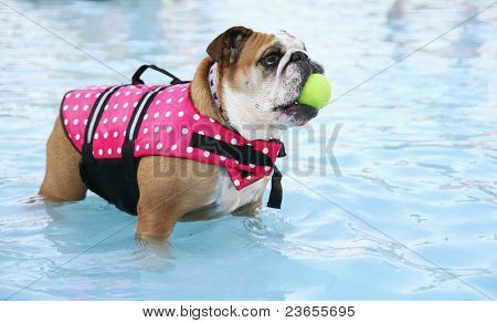 a dog in a swimming pool