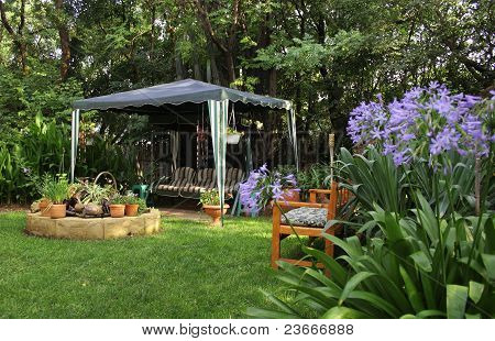 African Garden With Agapanthus
