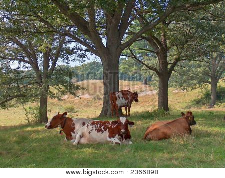 New England Pastoral Scene