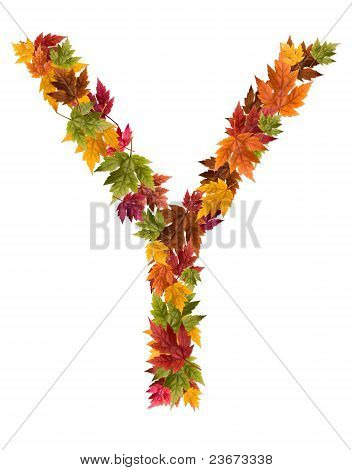 The letter Y made from autumn maple tree leaves