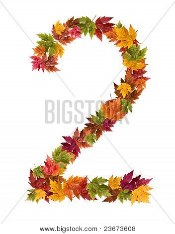 The number 2 made from autumn maple tree leaves