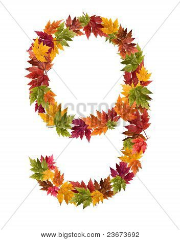 The number 9 made from autumn maple tree leaves